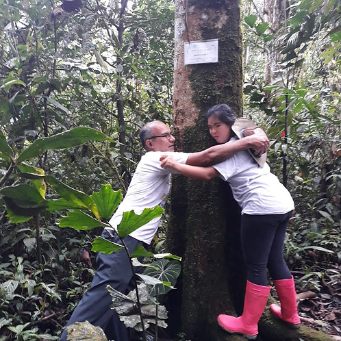 Protect 35+ year-old trees for one year