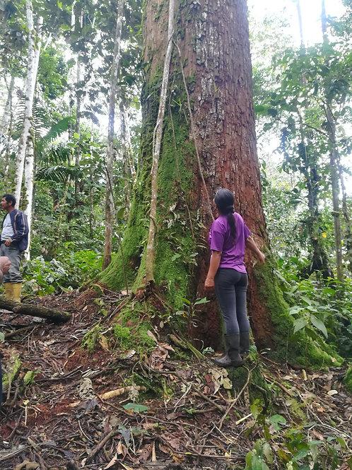 Proteger árboles centenarios durante un año.