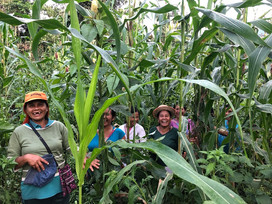 Converting farms into native forests: more families join in!