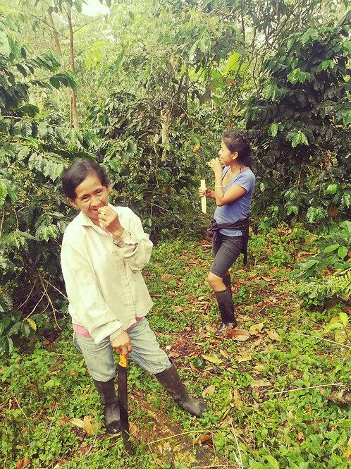 Restaurar 7 hectáreas del ecosistema de la Amazonía