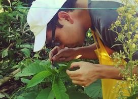 Scientifically Based Ecological Restoration