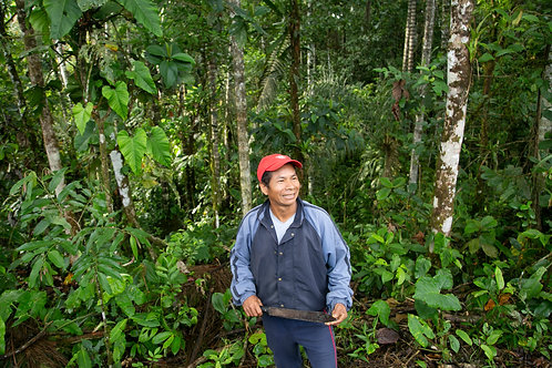 Restore 5 hectares in the Amazon rainforest