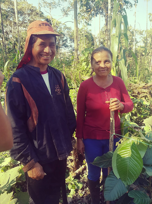 Restore 9 hectares in the Amazon rainforest