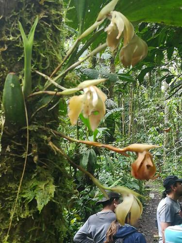 Orquídeas rescatadas