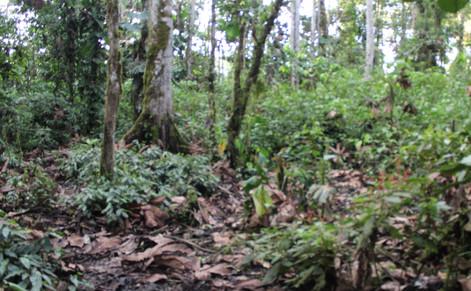 bosque baja diversidad.jpg