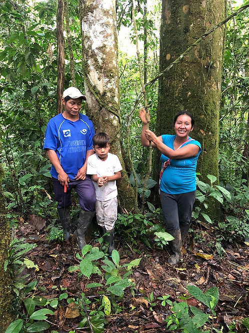 Restore 23 hectares in the Amazon rainforest