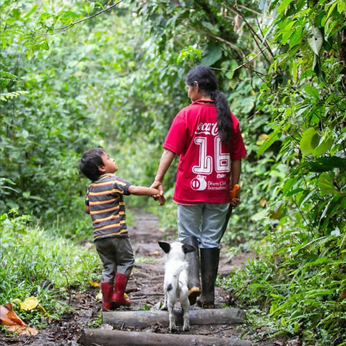 Restore 7 hectares in the Amazon rainforest