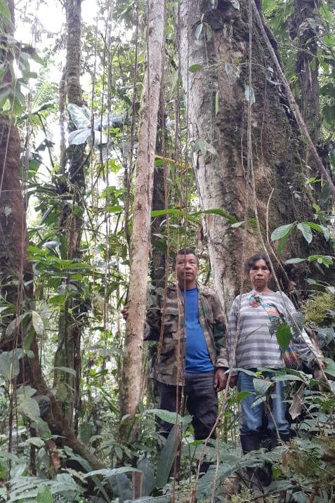 Restaurar 23 hectáreas de bosque secundario en la selva amazónica