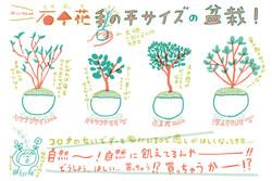 石木花の盆栽