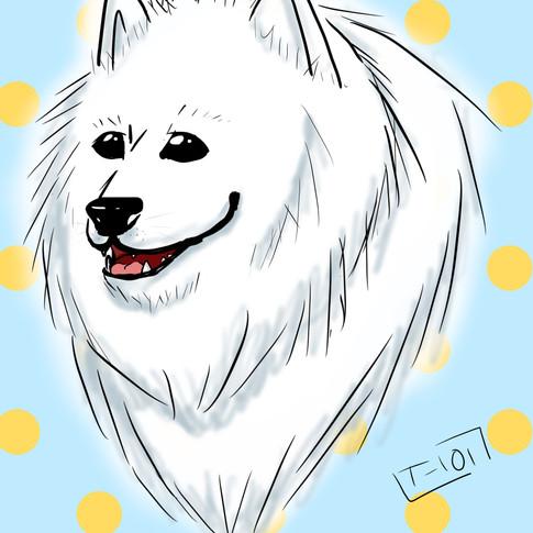 Samoyed Sketch
