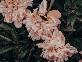 Cvetje Pižem