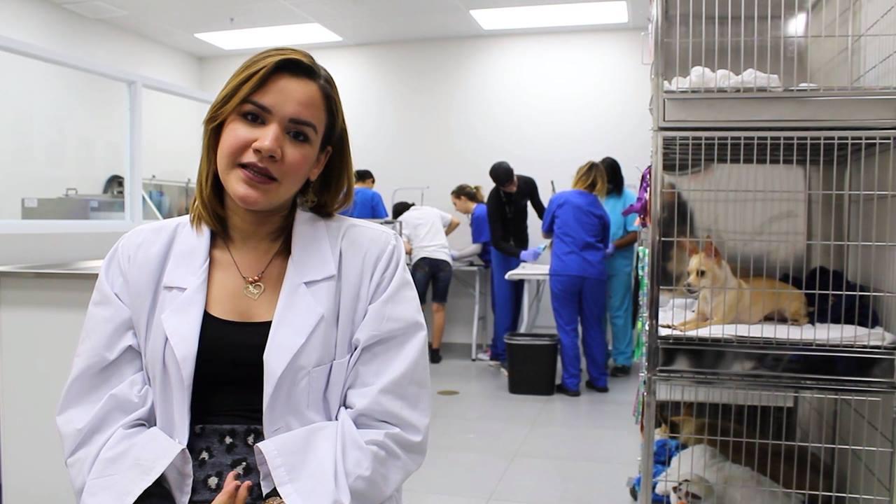 Asistente de Veterinario con Pet Grooming