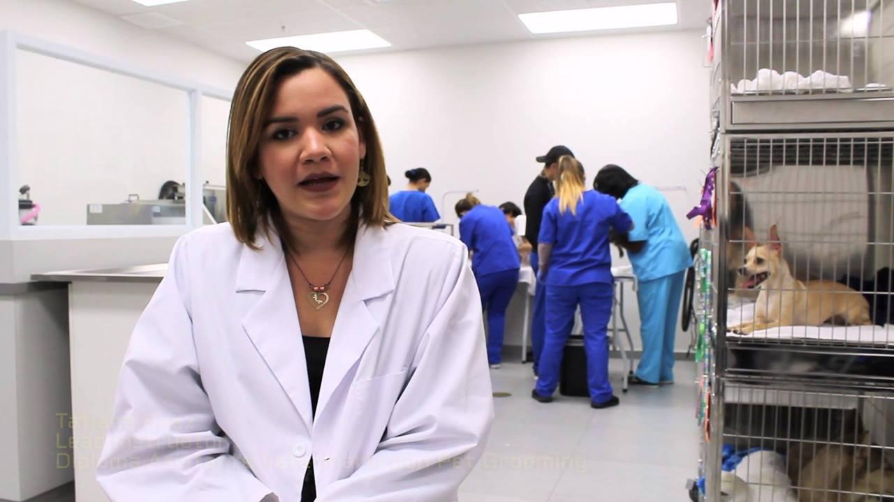 ¿Por qué hacen falta más Asistentes de Veterinarios?