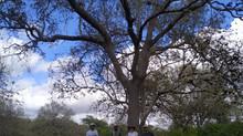 Existe floresta na Caatinga ?