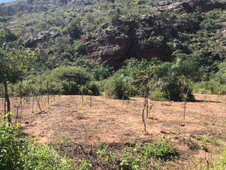 Arboretum of the noble flora of caatingas and dry forests is created in the National Park of Catimba