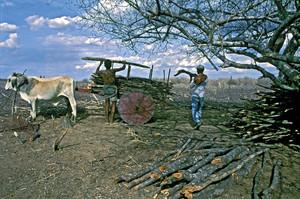 Consequências da pressão humana na Caatinga é destaque na sessão de Ecologia da Revista FAPESP