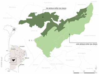 Caatinga is featured on the WWF Brazil website: two new protected areas