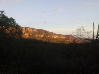 The Field Course of Ecology and Conservation of the Caatinga completes a decade of existence