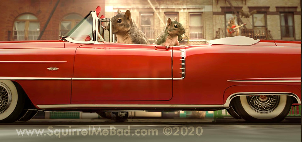 squirrles driving cadillac copy.jpg