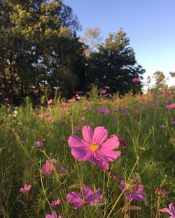 Wild for this wildflower garden 😍