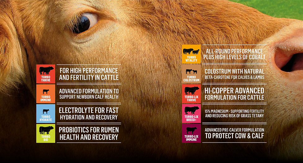 Products-cattle.jpg