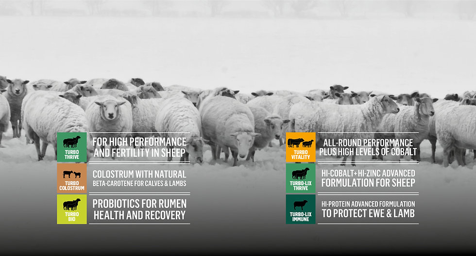 Products-sheep.jpg