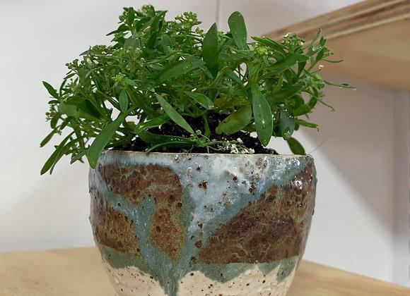 不規則手感釉鐵植栽 Tactile smokey lilac pinch pot with plant