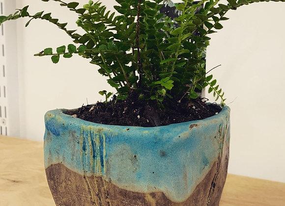 綠紋鐵斑室內植栽 Match turquoise matte pot with Boston Fern