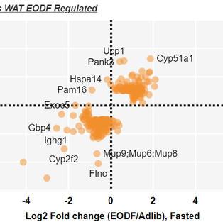 EODF - Adipose Depots