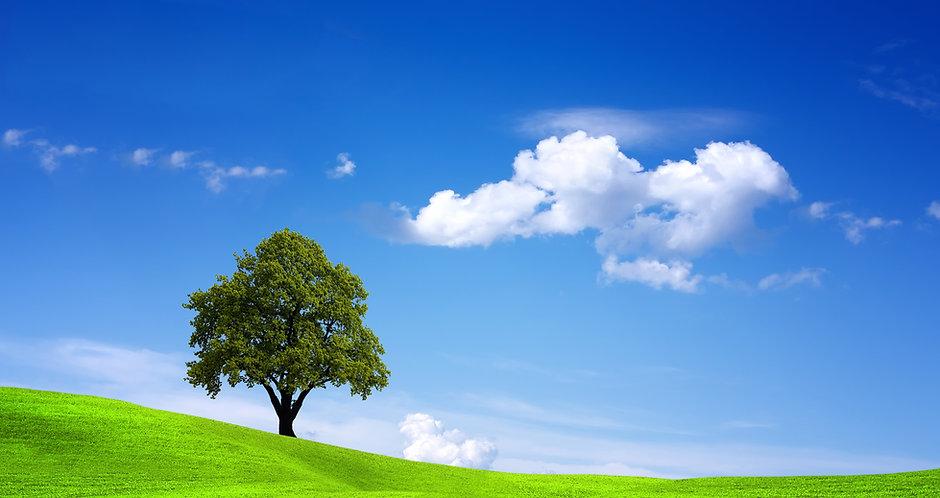 Oxymagic Tree Image (orig. from company).jpg