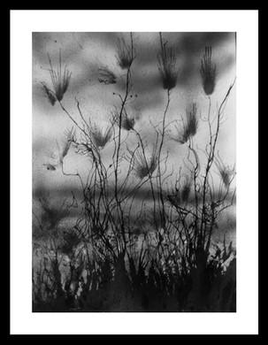 14. Chardons sur la dune Format A3.jpg
