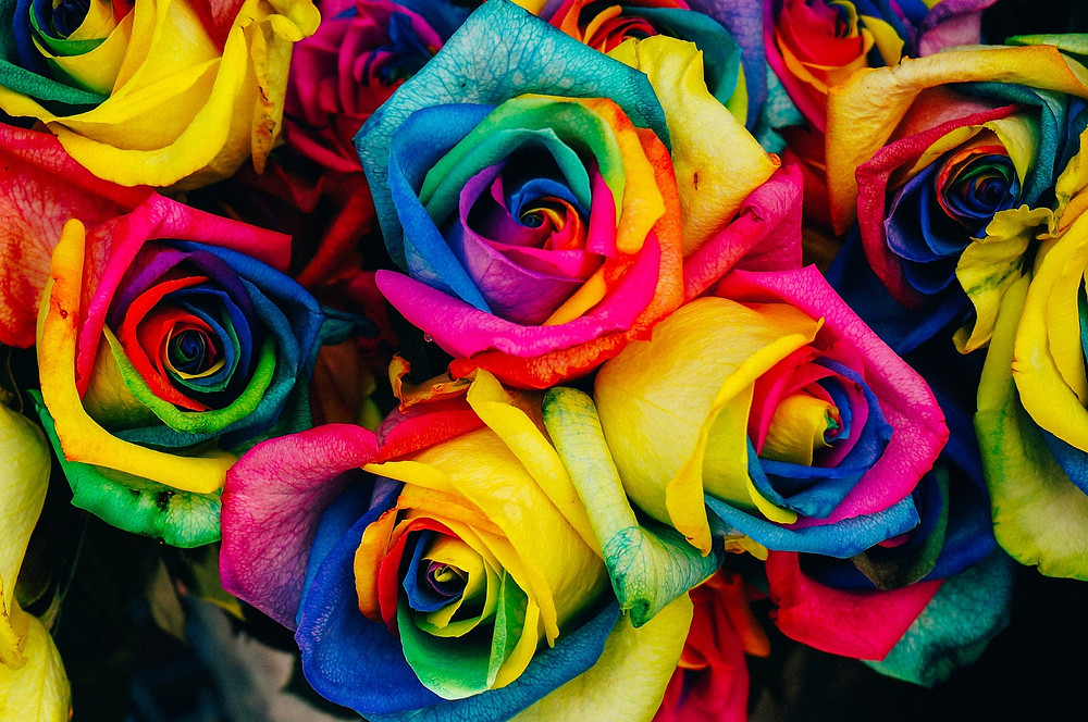 Rainbow roses close up and tightly bunched together