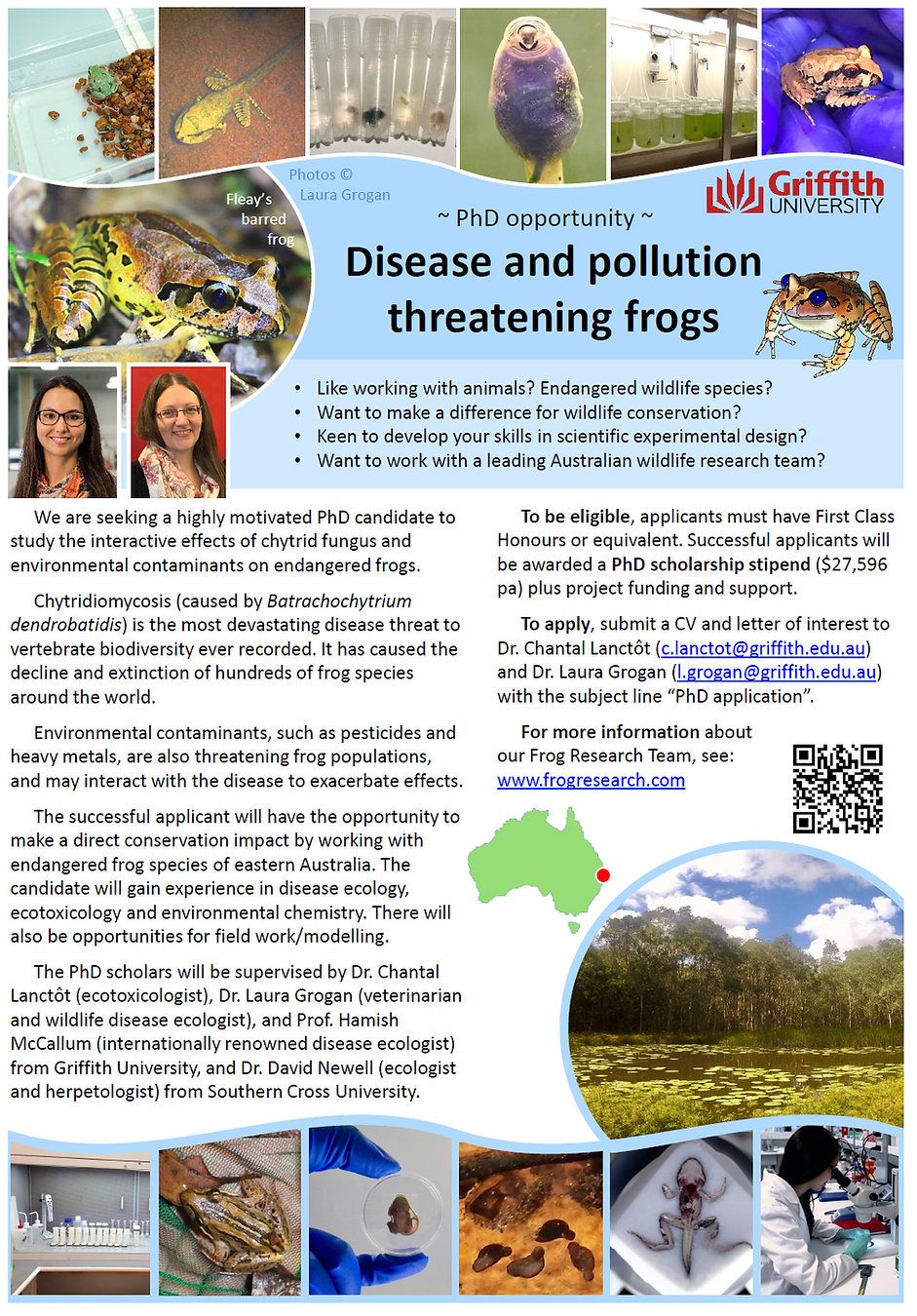 PhD flyer frogs and pollutants 3.jpg