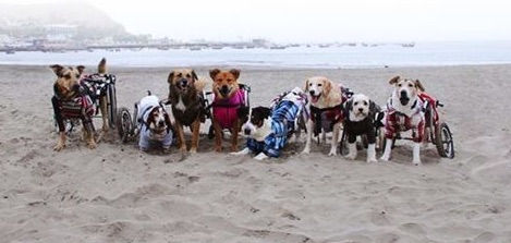 dogs at beach.jpg