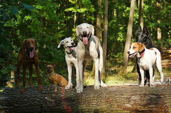 Hundeschule.jpg