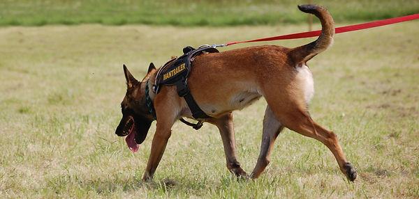 search-dog-620175.jpg