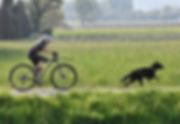 Zughundsport.jpg