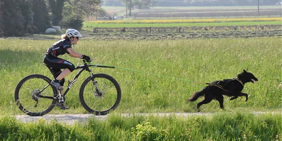 Zughundesport Training