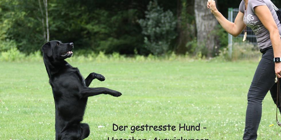 Dog's Activity bei 4. Hundesymposium Pforzheim (20. - 22.03.2020)