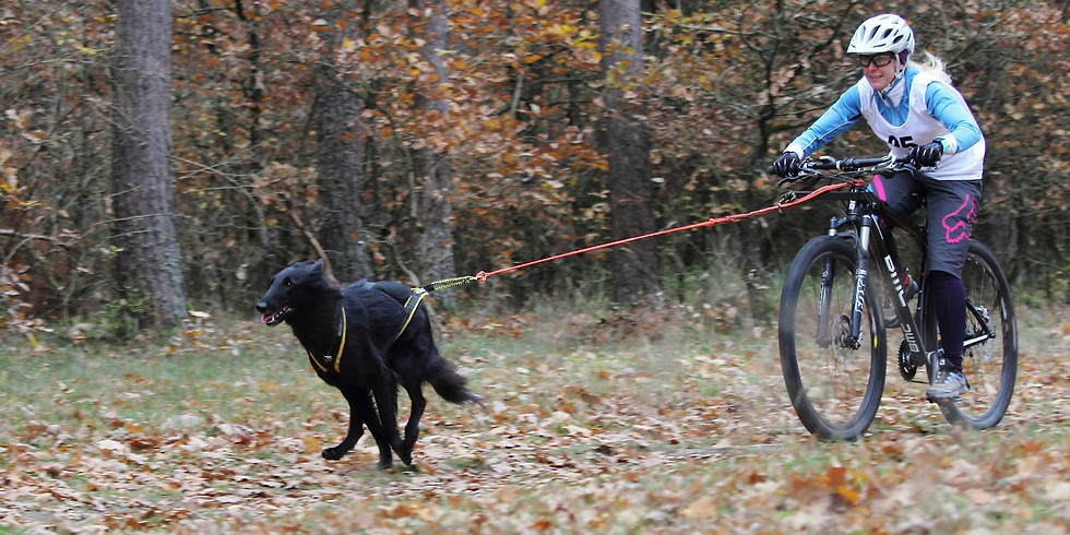 Dog's Activity beim 29. Frankonia Open 21. – 22.11.2020 Lauf a.d. Pegnitz
