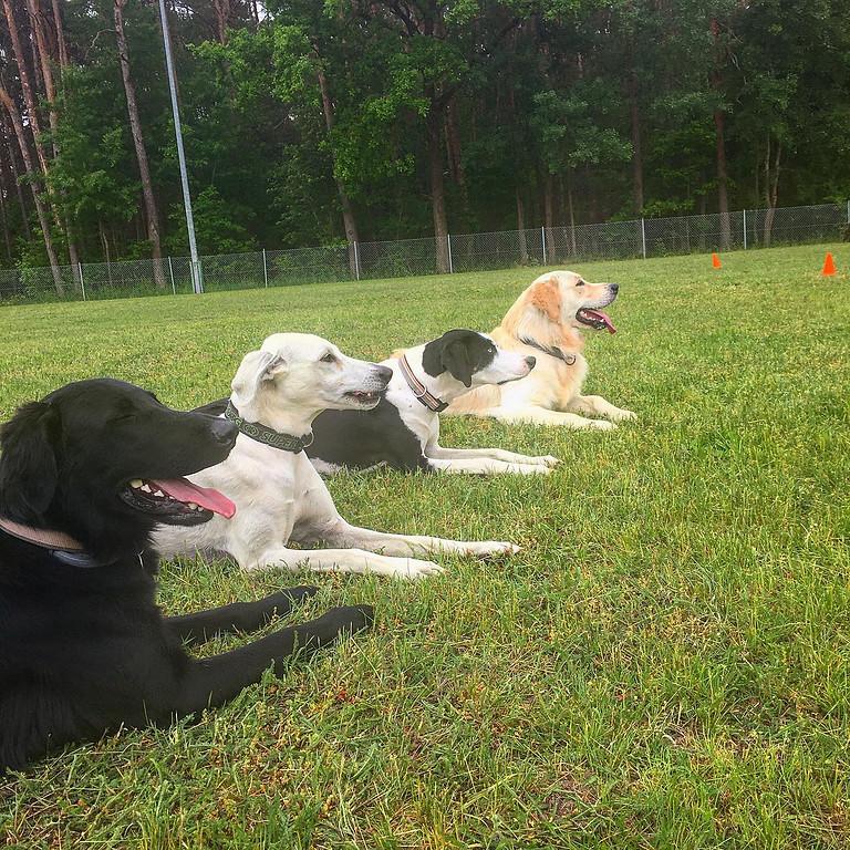 Gemischte Erziehungsgruppe - Für alle Hund-Mensch-Teams