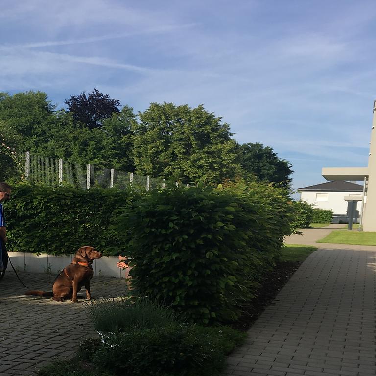 Mantrailing Obermichelbach Gruppe 1