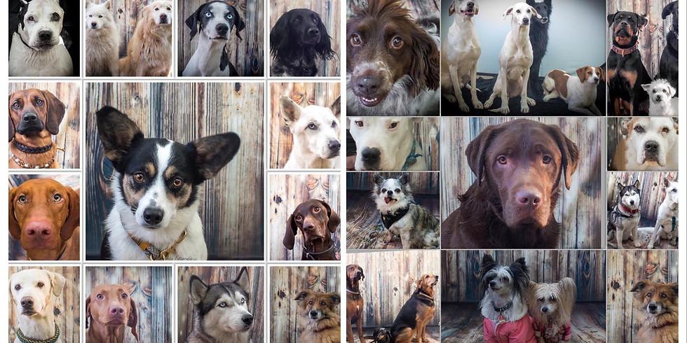 Dog's Activity in Dennenloher Hundespieltage am 25.10. um 14 Uhr
