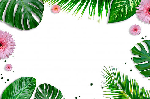 leaves-background-white-with-green-leave