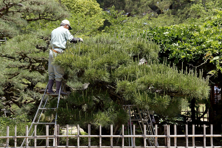 庭園設計 日本花卉文化株式会社