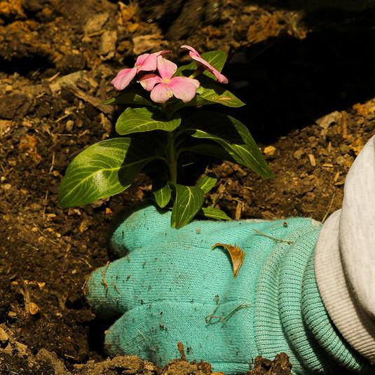 園芸 植え込み