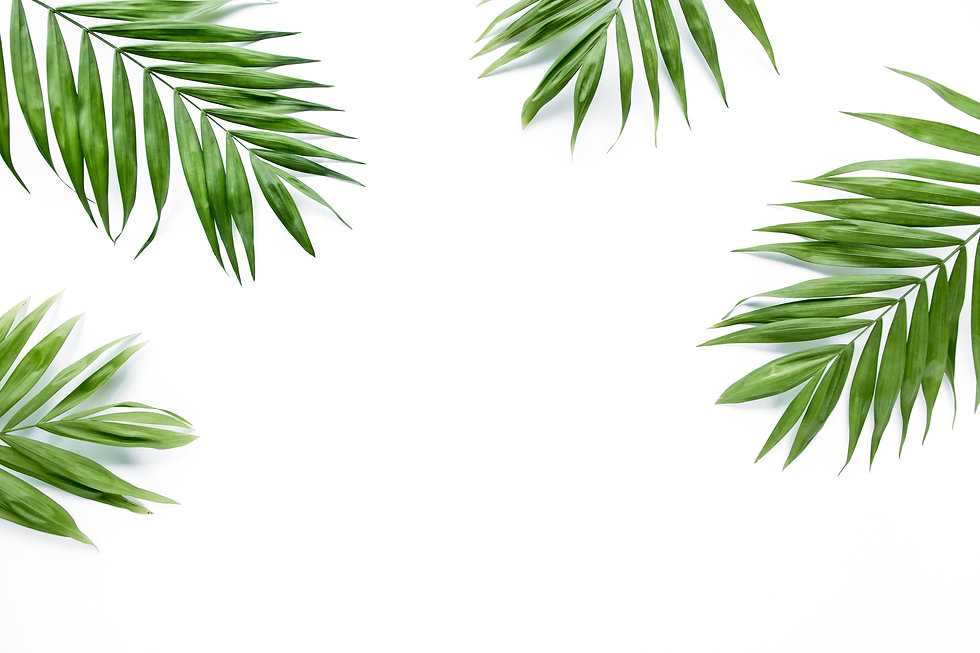 green palm leaf branches on white background. flat lay, top view.jpg