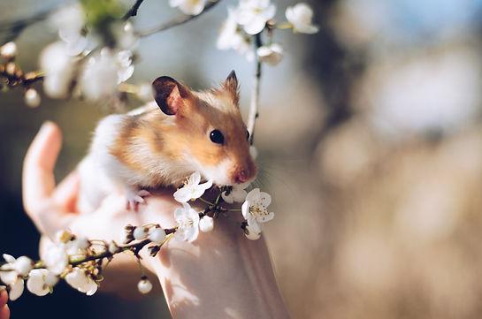 hamster-2013665_edited.jpg