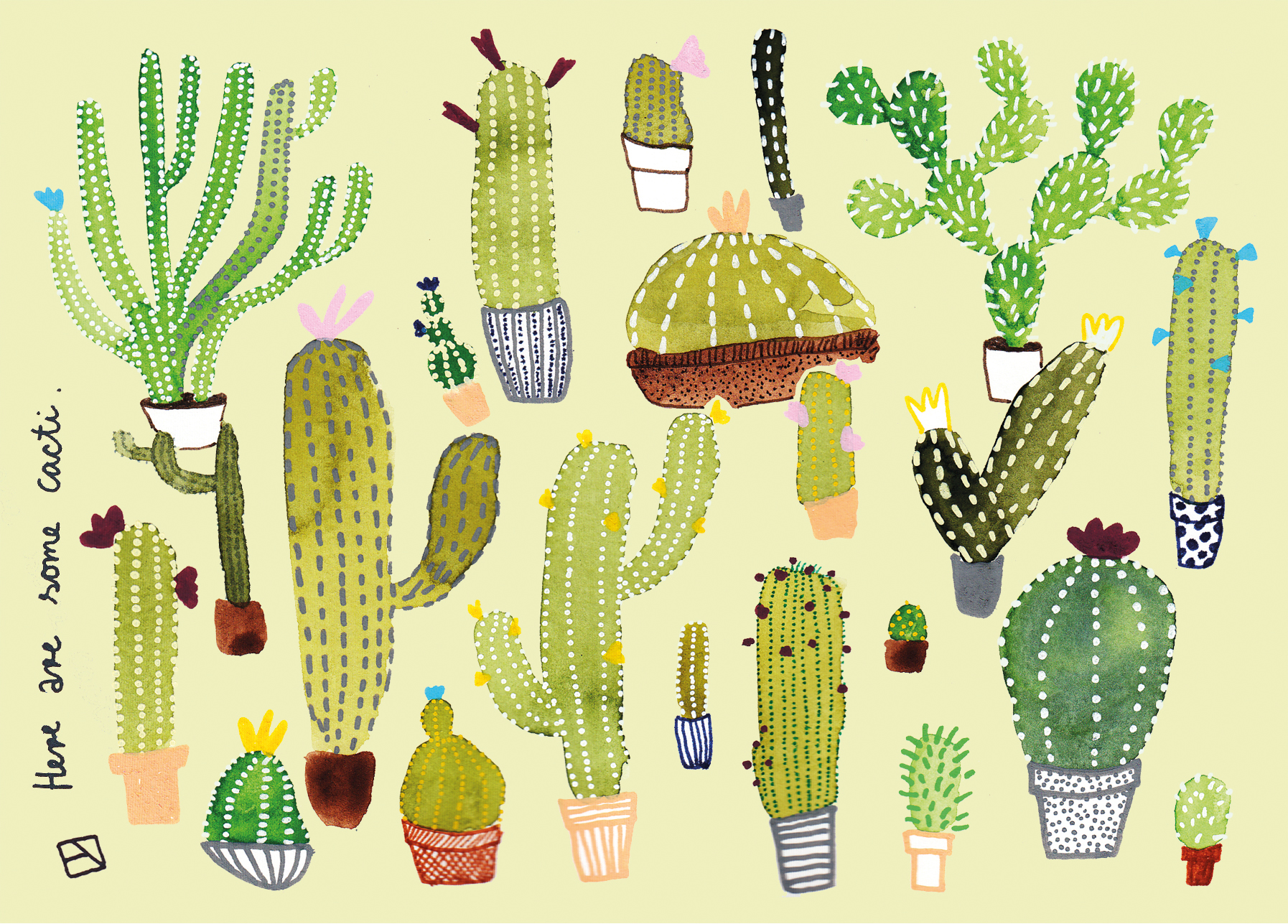 Here are some cacti.