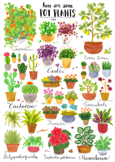 Here are some pot plants.